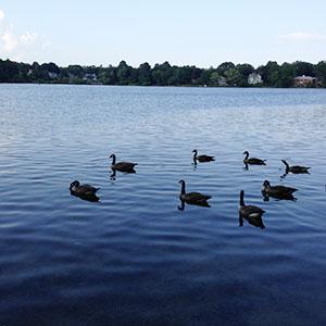 Crystal Lake, Newton, MA