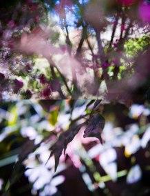 No. 8, Reverie, Landscape Diptych