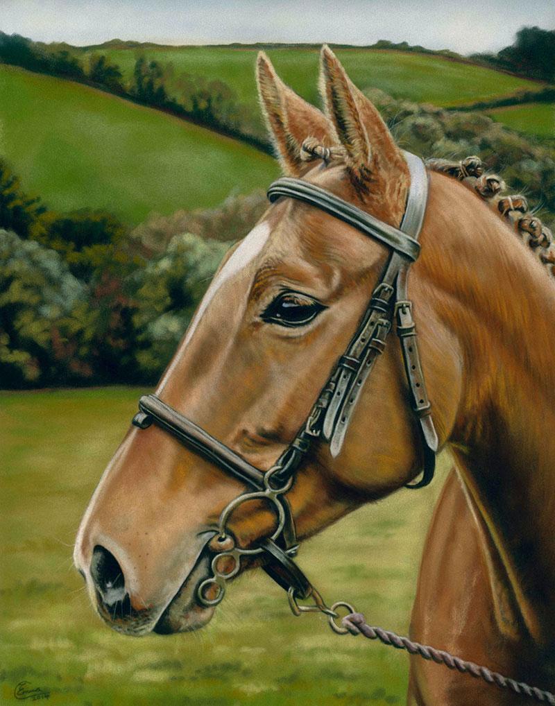 Other Animals  Emma Colbert Art Northern Ireland  Artist and illustrator  Belfast  Armagh