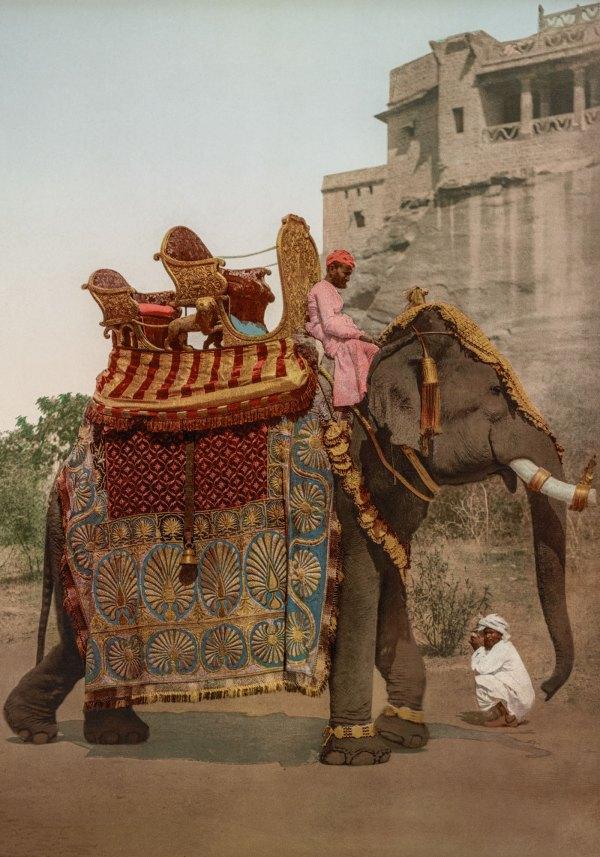 photo ancienne inde elephant Tamil Nadu