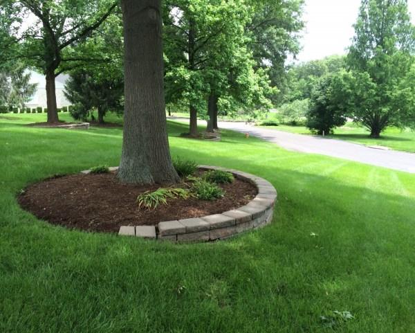 apply mulch trees