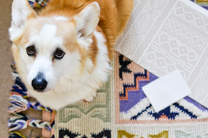 Removable mudcloth wallpaper by Domisticate on Spoonflower + Caravan rug from Anthropologie in Lilac with bonus Corgi