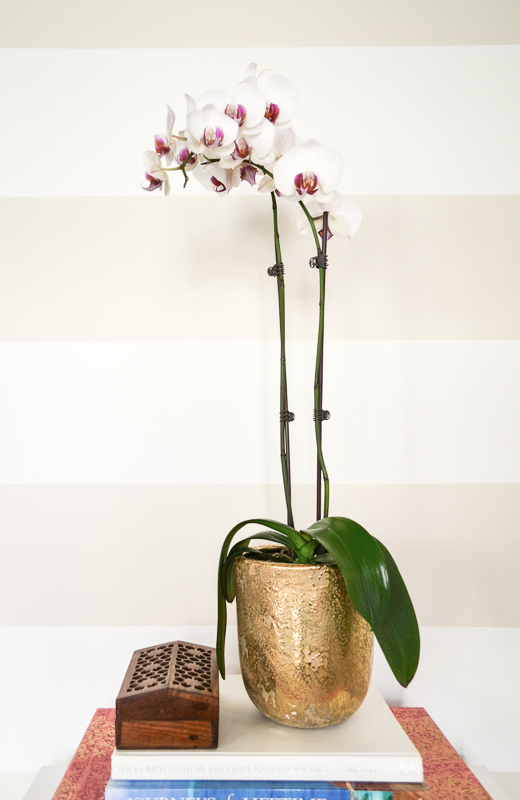 Orchid in gold planter