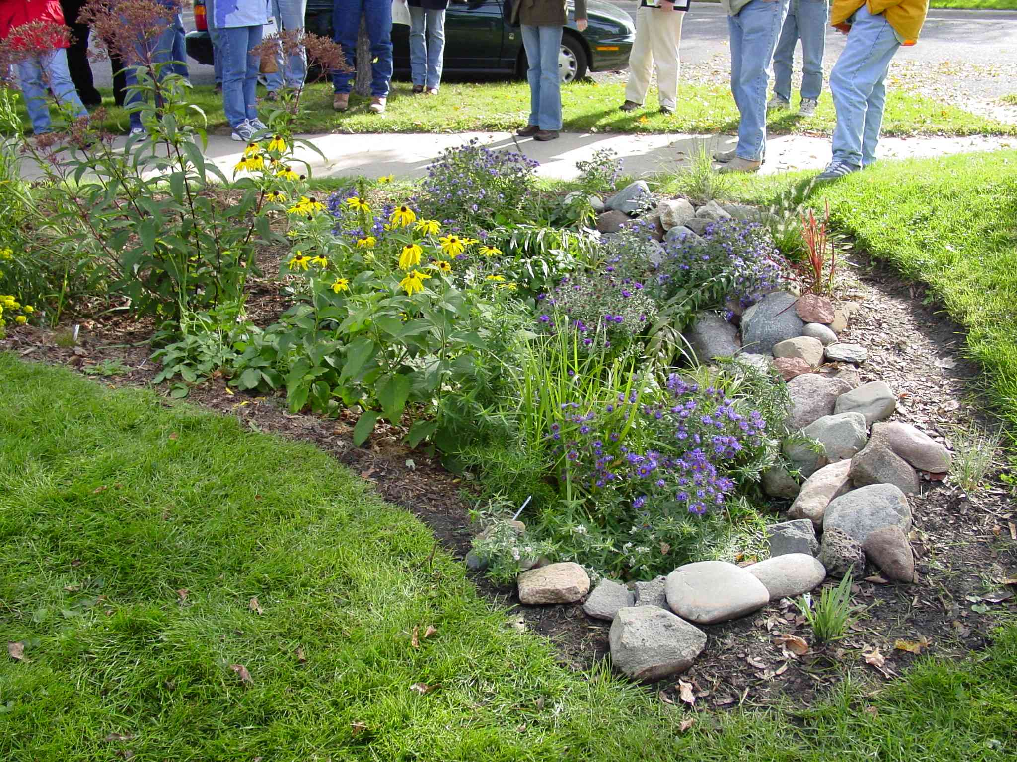 You can get really creative with rain gardens, and they can be quite visually pleasing.  River rocks accent the native plants, and the gardens form is as beautiful as its function.