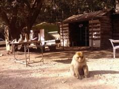 I am monkey. Hear me roar.
