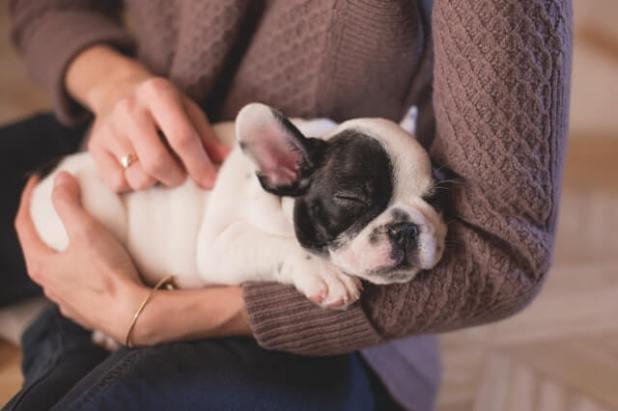 Make extra money massaging pets