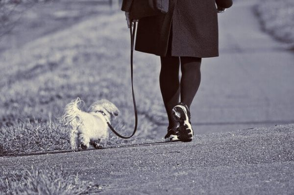 Dog Walking Services - starting a small business from home ideas