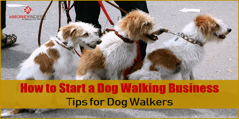 How to Start a Dog Walking Business Tips for Dog Walkers