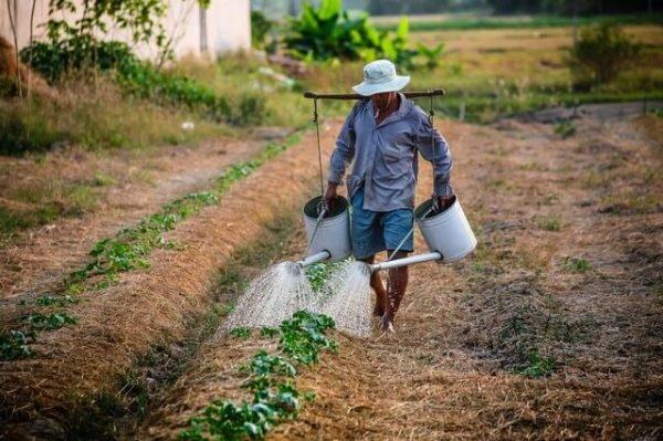 working on organic farms