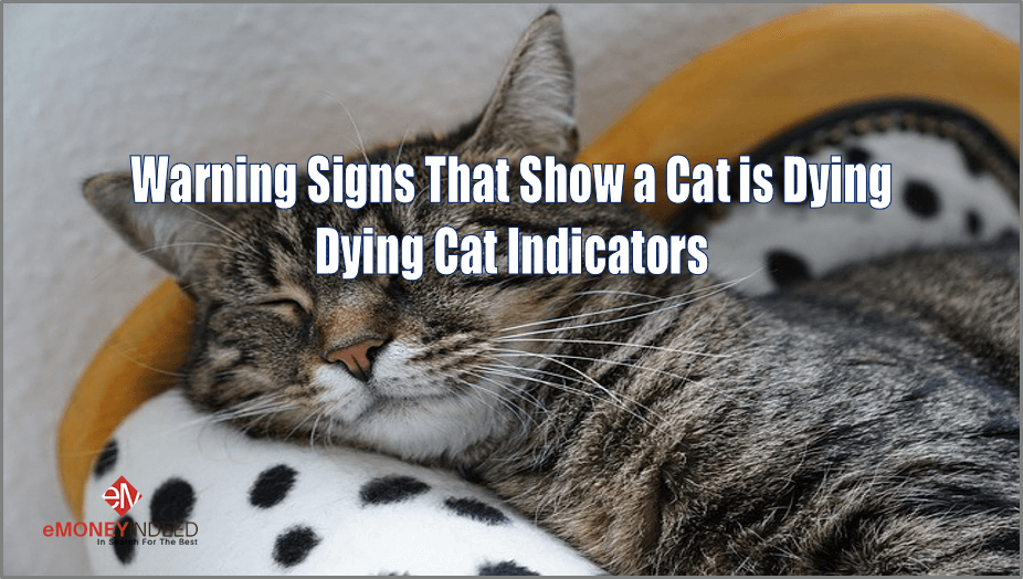 Warning Signs That Show A Cat Is Dying Dying Cat Indicators Emi