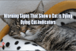 how-to-tell-when-a-cat-is-dying