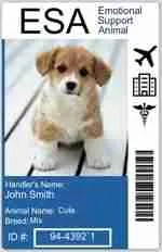 Emotional Support Animal Prescription Letter for $99
