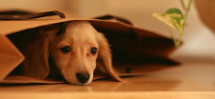 cachorro-triste1