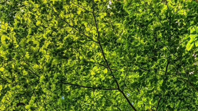 canopy-2552954_960_720