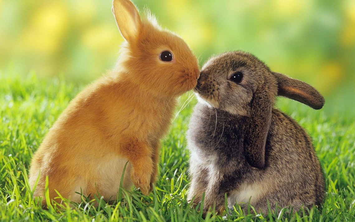Rabbits-Kiss