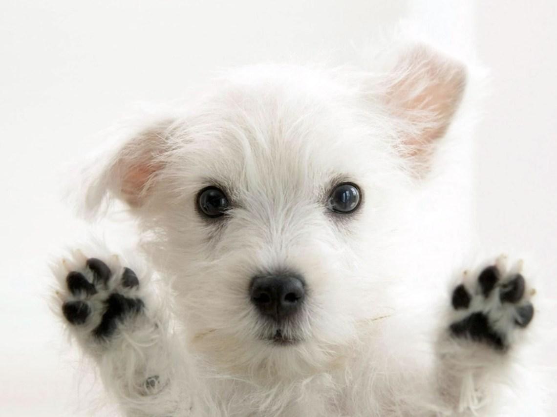 cachorro-bonito
