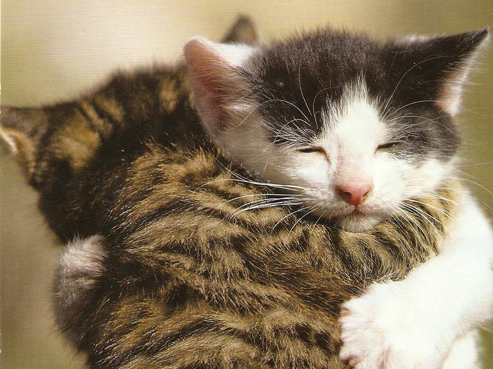 gatinhos-abracando
