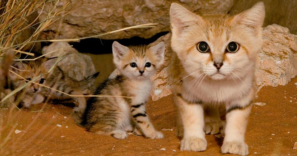 gatos-areia