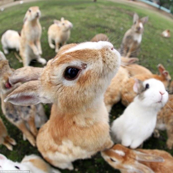 ilha-dos-coelhos