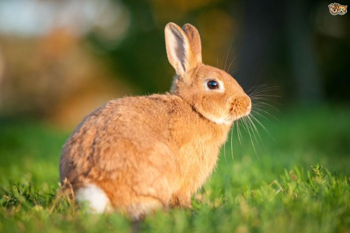 rabbit-basics-ten-facts-all-potential-owners-should-be-aware-of-554a26f3058ae