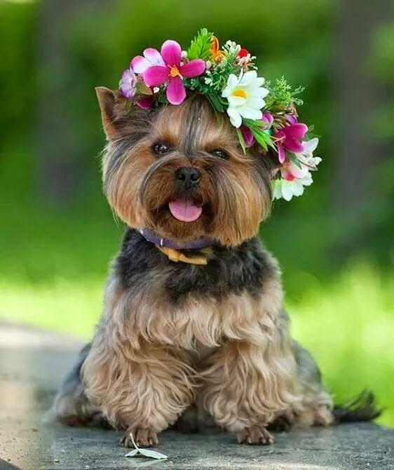 96318688a0d2b05a249f9b6360450423--flower-children-flower-girls