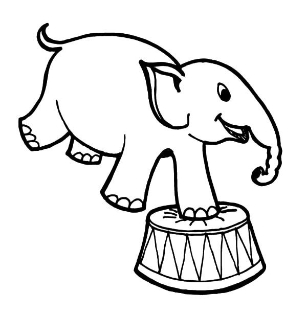 How-to-Draw-Circus-Elephant-Coloring-Pages