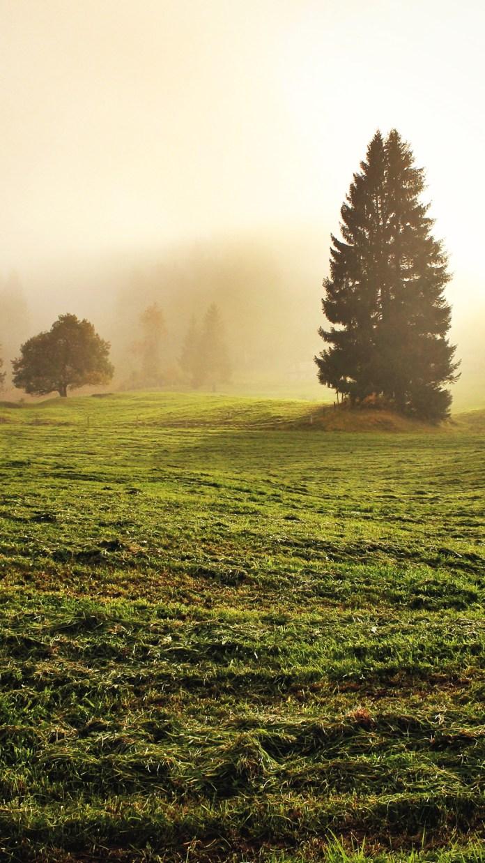 misty-meadow-2247