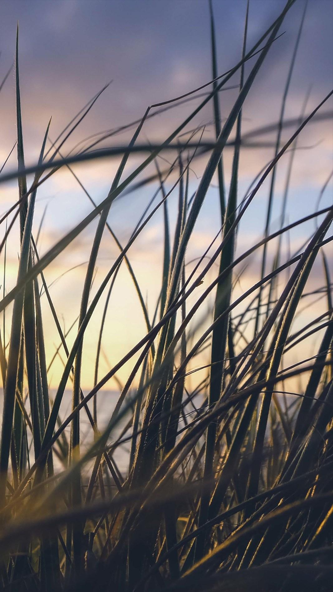 sea-grass-4474