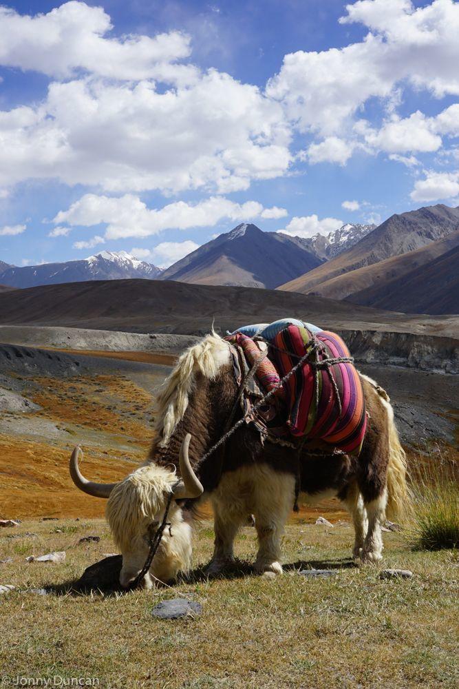 20d25fddb3164eaf2f0d537bae68717e--afganistan-people-afghanistan-travel