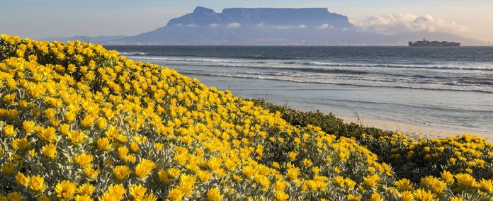 Africa-Southern-Africa-South-Africa-Cape-Town-Floral-Coast