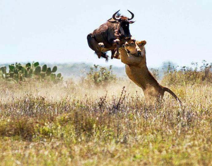 animais-africa