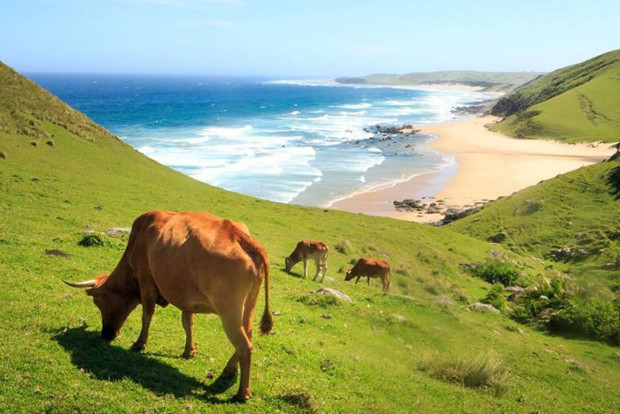 south-africa-s-hidden-gems-as-recommended-by-blogg-01-14-620x414