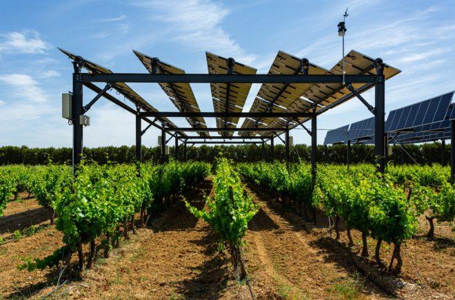 Solární panely nad vinicí v jižní Francii