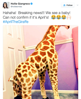 April The Giraffe Memes