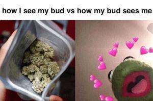 Funny 420 Memes