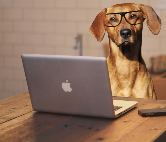 Email Uprising Review : Write Great Emails - Let your dog write your emails?