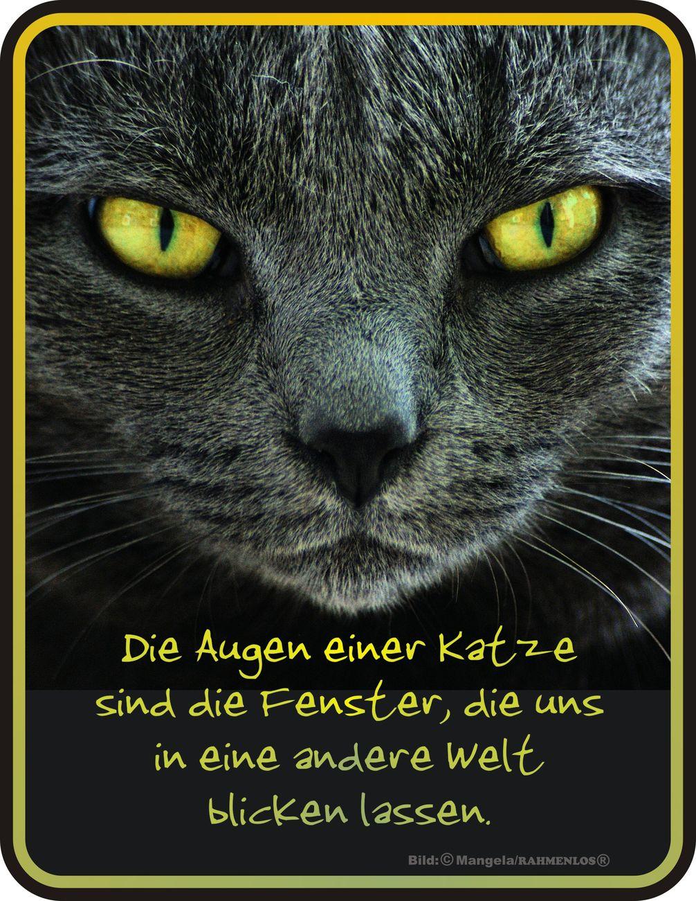 Die Augen der Katze  BlechSchild Spruch  FunSchilder