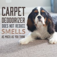 Carpet Deodorizer Does Not Remove Smells from Carpet