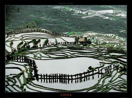 Terraces of Yunnan