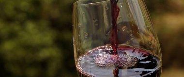 mostra de vinho