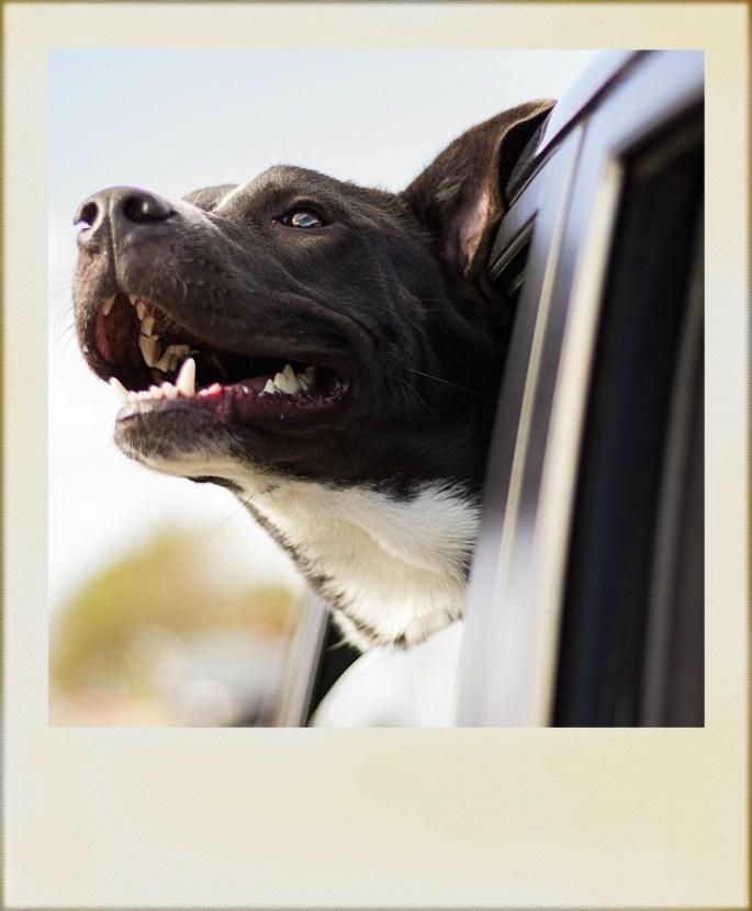 cane-al-finestrino