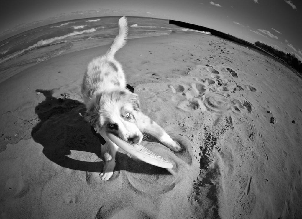 puppy-1391431_1280