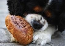 La salute e l'alimentazione degli animali domestici