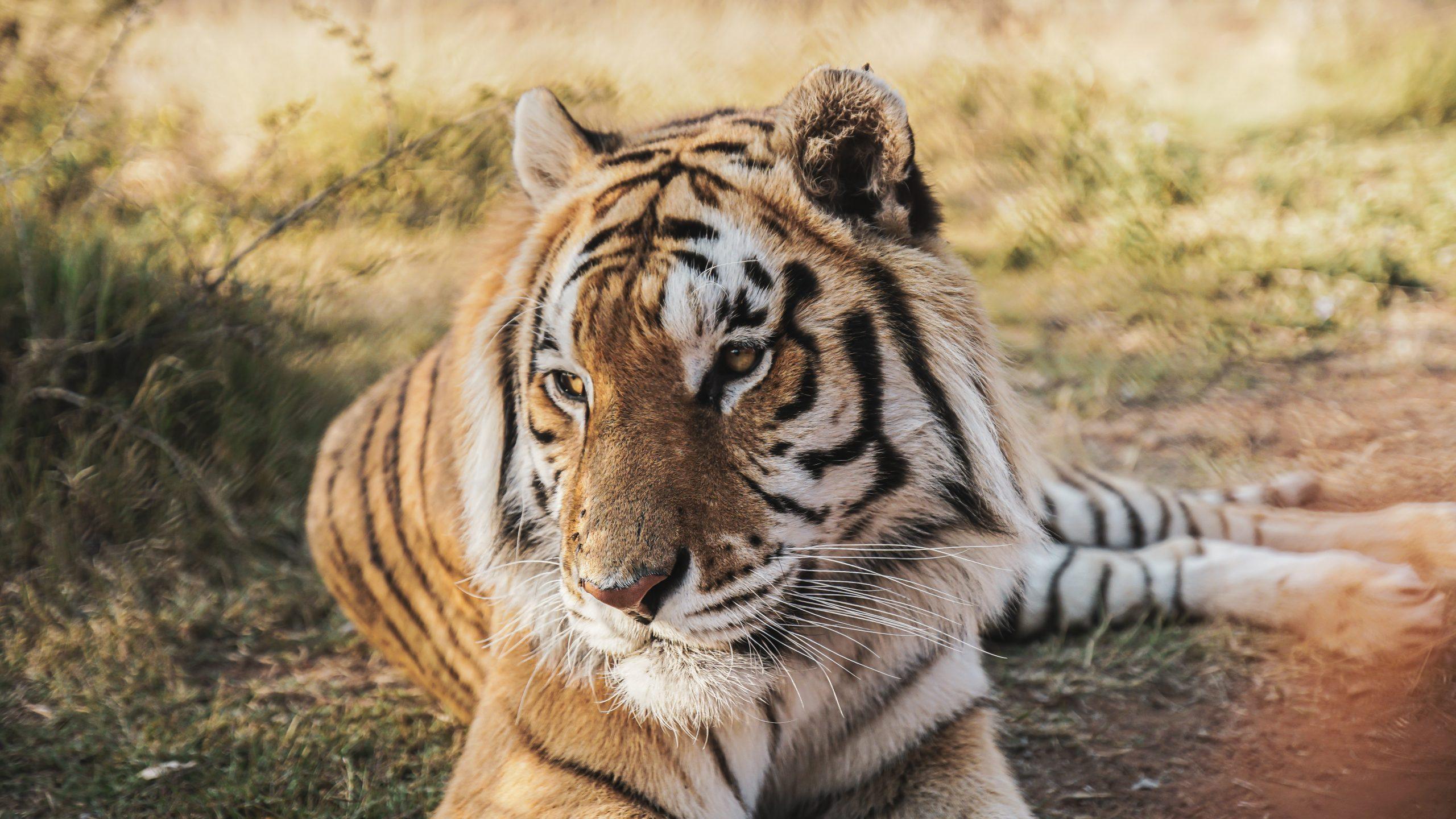 South Africa-Enjoy The Wildlife