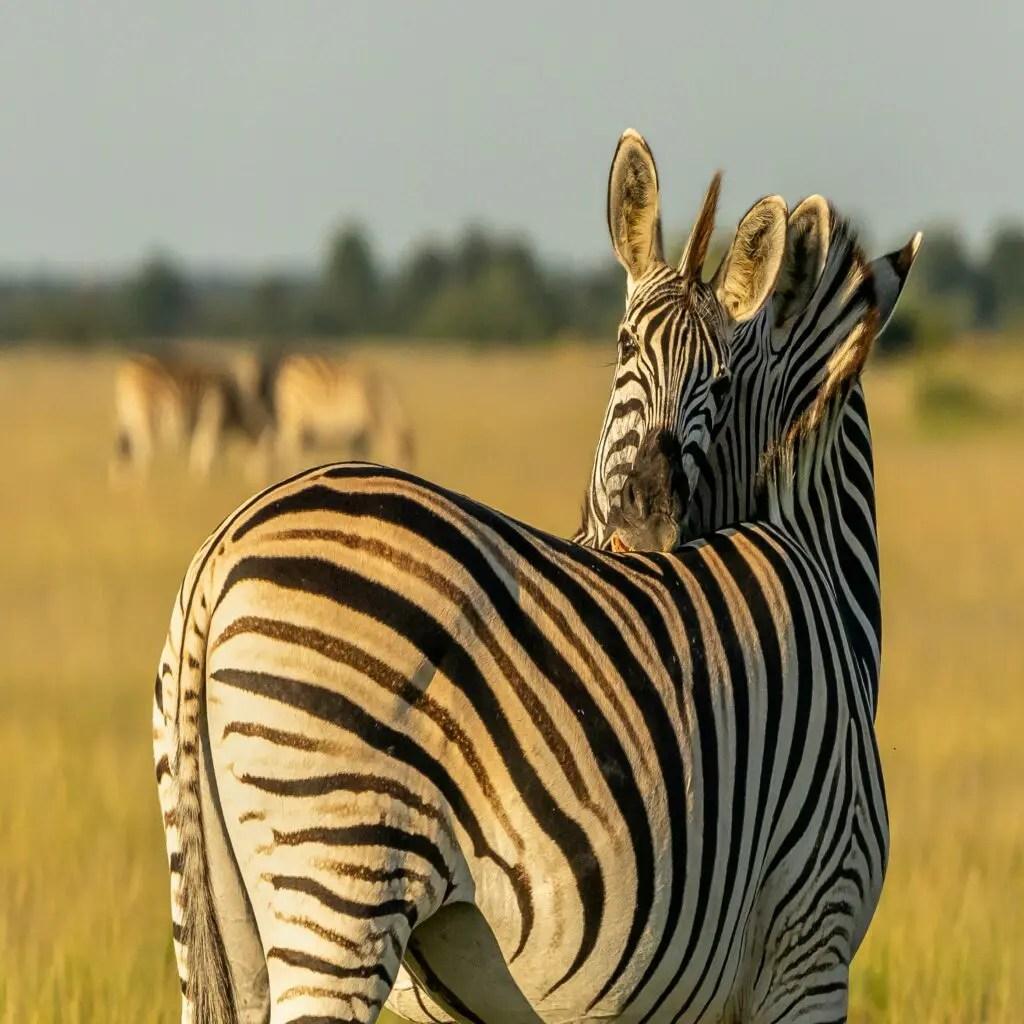 Okavango Delta- Relax in Luxury