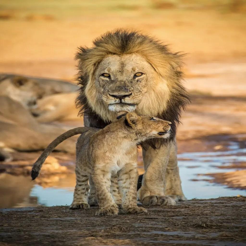 Okavango Delta-Top Destination for a Safari