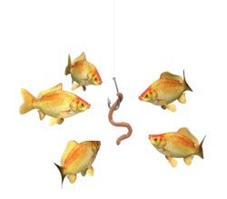risky_fish_bait_6820