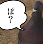 鳩が豆鉄砲を食ったよう