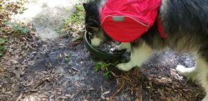 I need to make sure this is water, so I will put my paw in it