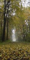 001-Herbststimmung-Im-Emsdettener-Venn-L-Klasing